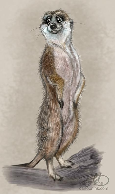 MeerkatSketchFB002