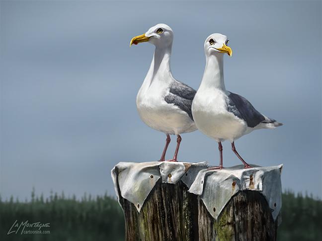 SeagullsFINAL
