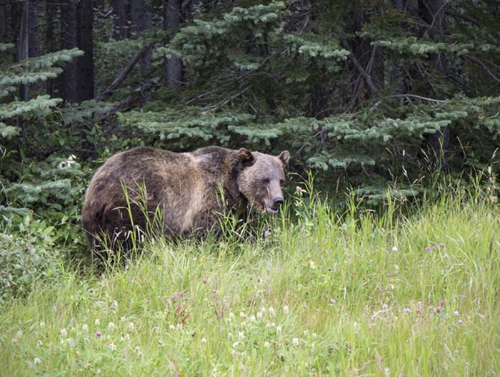 Bear152